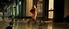 pigeon1_0_cropped.jpg