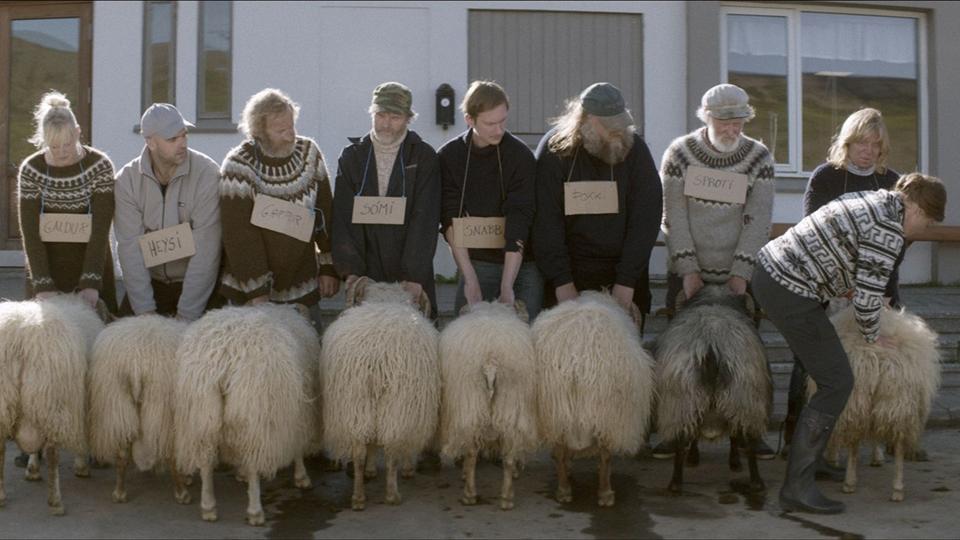 Barany. Islandzka opowieść